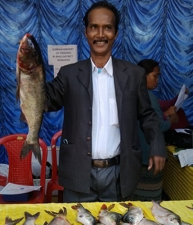 Fish farmer Weris Talang from Nongpoh showing one of the fishes from his pond at the Aquafest 2013 on Wednesday. He also received a citation from the Meghalaya chief secretary WMS Pariat for being a role model to other fish farmers in the state.